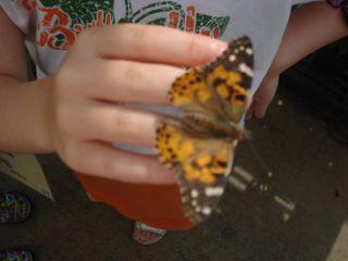 Butterflies 020