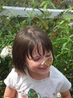 Butterflies 034