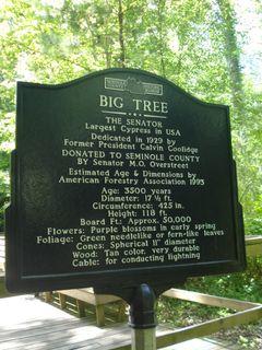 Big tree 052
