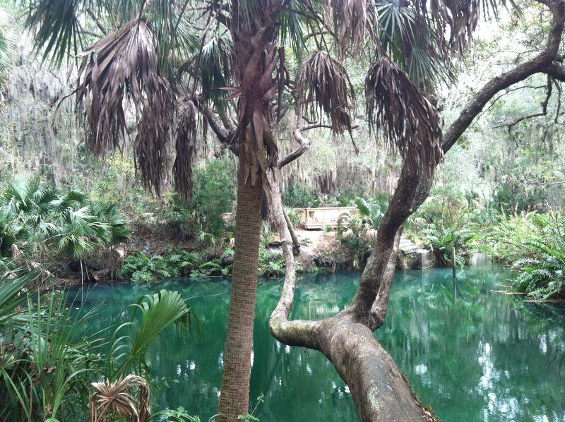 Green Springs 155