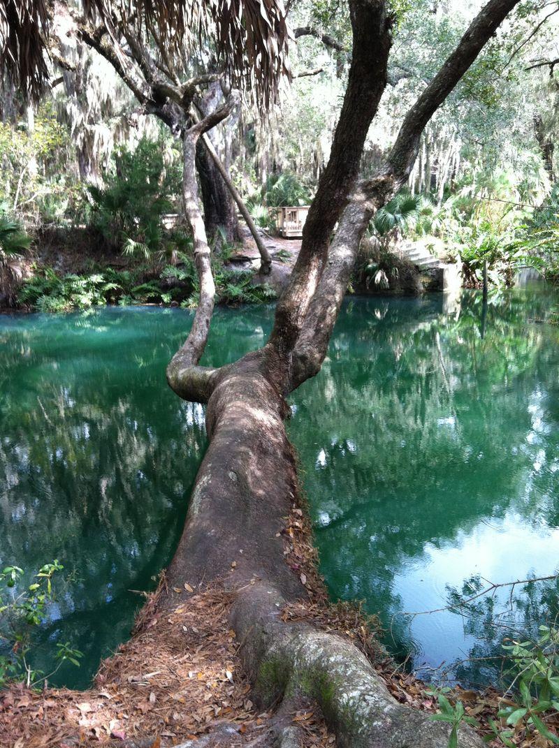 Green Springs 216