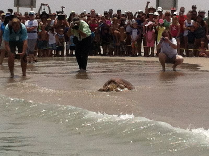 Turtle release 017