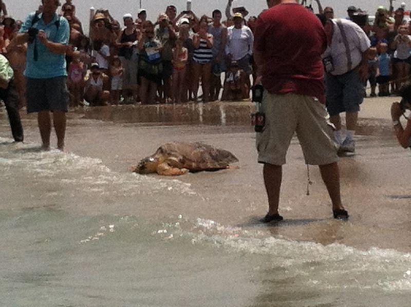 Turtle release 032