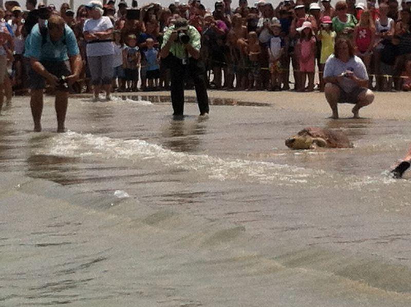 Turtle release 016