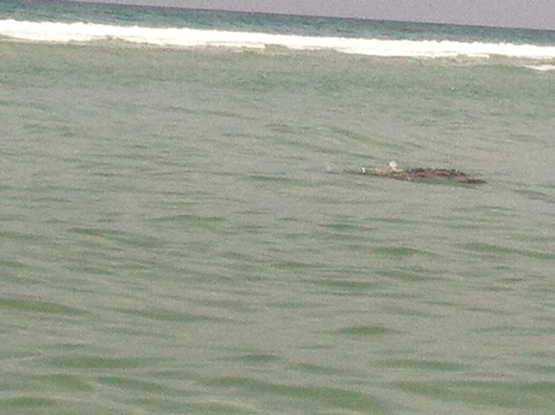 Turtle release 040