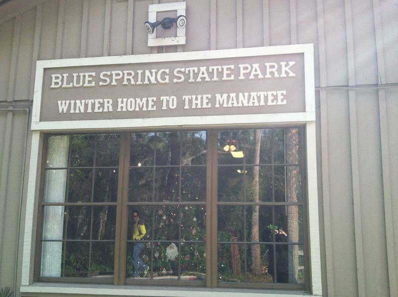 Blue_spring_state_park 090