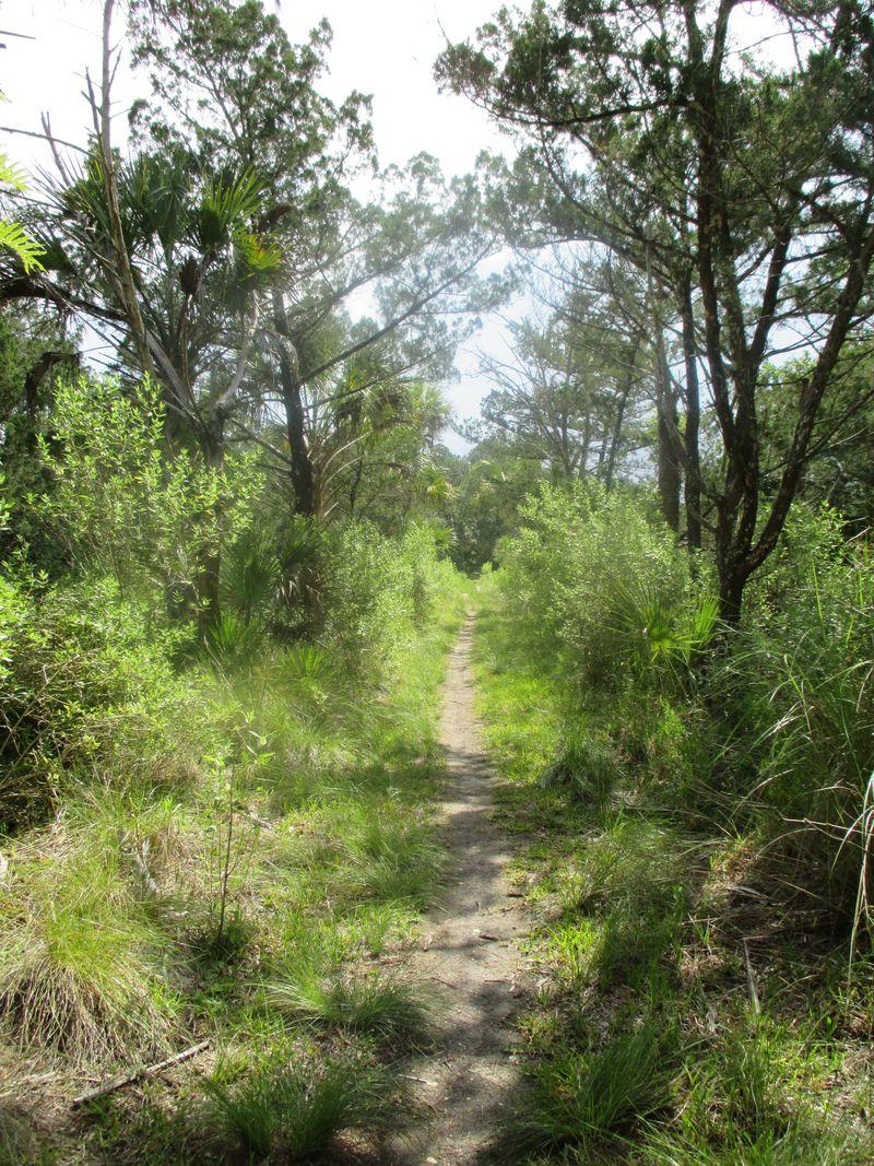 Bulow Creek 054