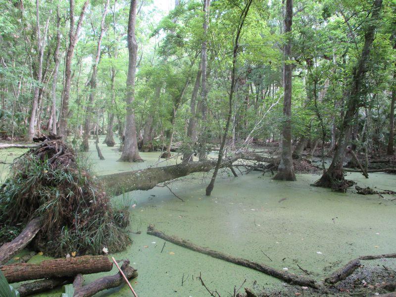 Bulow Creek 050