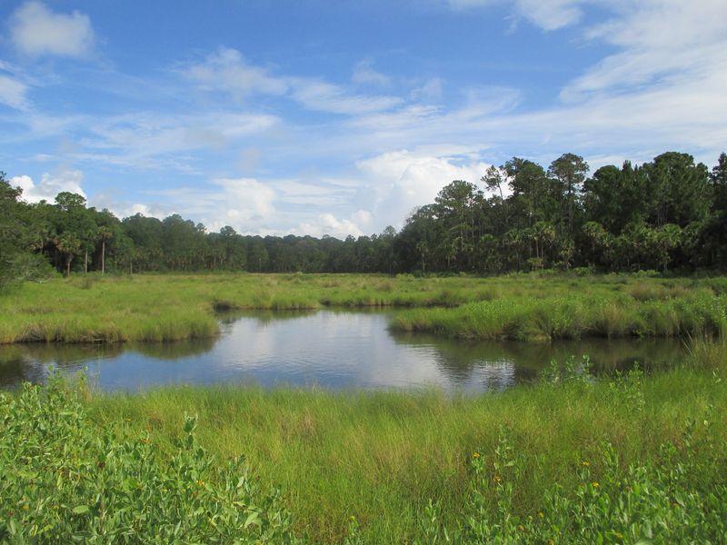 Bulow Creek 056