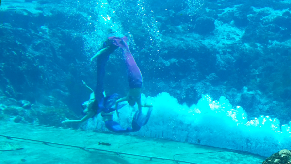 Weeki Wachee Springs State Park In Spring Hill Florida