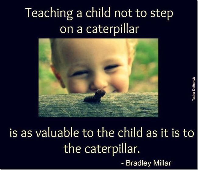 My two cents on teaching kids to value life more