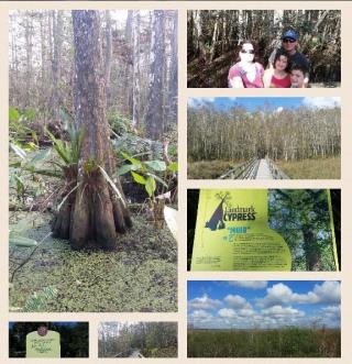 Corkscrew-swamp-sanctuary