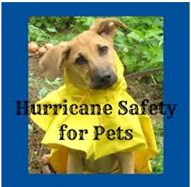 Hurricane-safety-pets
