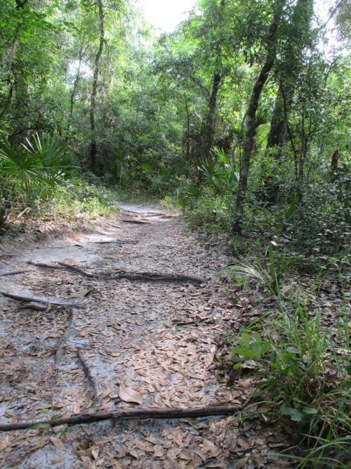 Doris-leeper-spruce-creek-preserve
