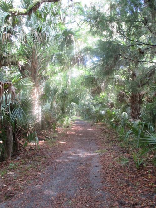 Bulow-creek-state-park