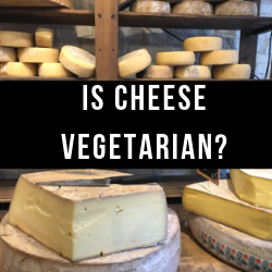 Is-cheese-vegetarian