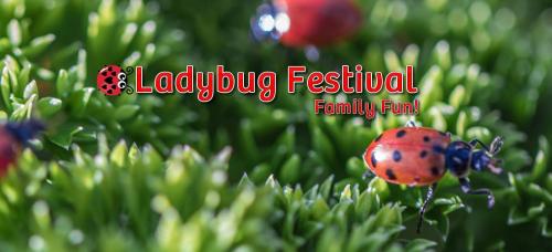 Ladybugfestival
